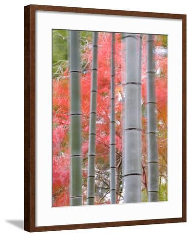 Maples Trees and Bamboo, Arashiyama, Kyoto, Japan-Gavin Hellier-Framed Art Print