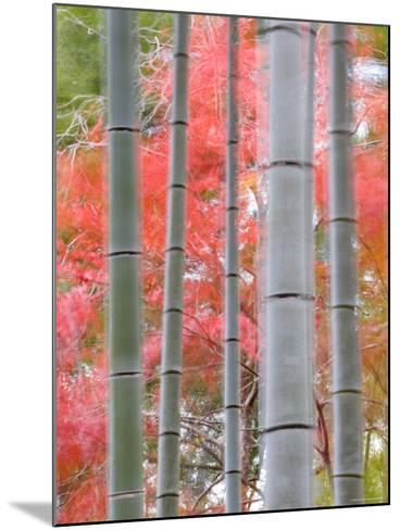 Maples Trees and Bamboo, Arashiyama, Kyoto, Japan-Gavin Hellier-Mounted Photographic Print