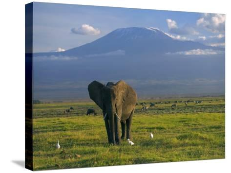 Elephant, Mt. Kilimanjaro, Masai Mara National Park, Kenya-Peter Adams-Stretched Canvas Print