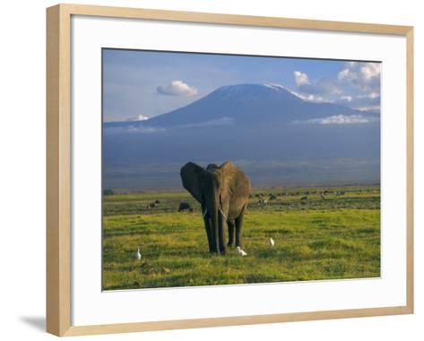 Elephant, Mt. Kilimanjaro, Masai Mara National Park, Kenya-Peter Adams-Framed Art Print
