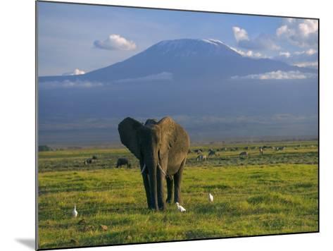 Elephant, Mt. Kilimanjaro, Masai Mara National Park, Kenya-Peter Adams-Mounted Photographic Print