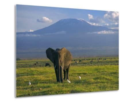 Elephant, Mt. Kilimanjaro, Masai Mara National Park, Kenya-Peter Adams-Metal Print