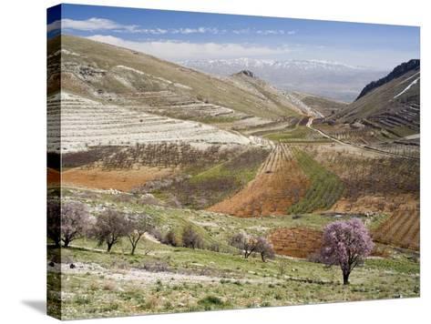 Niha, Bekaa Valley, Lebanon-Ivan Vdovin-Stretched Canvas Print