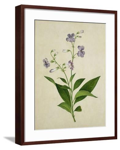 Bush Thunbergia, c.1800-1840--Framed Art Print
