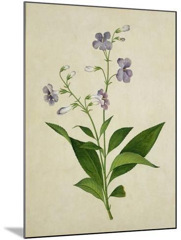 Bush Thunbergia, c.1800-1840--Mounted Giclee Print
