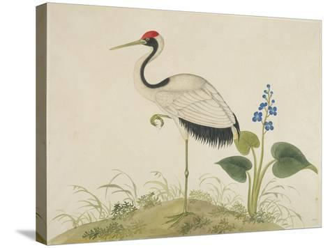 Red-Crowned Crane, c.1800-1840--Stretched Canvas Print