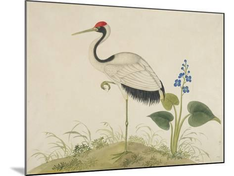Red-Crowned Crane, c.1800-1840--Mounted Giclee Print