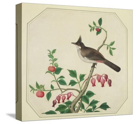Taiwan Yuhina, c.1800-40--Stretched Canvas Print