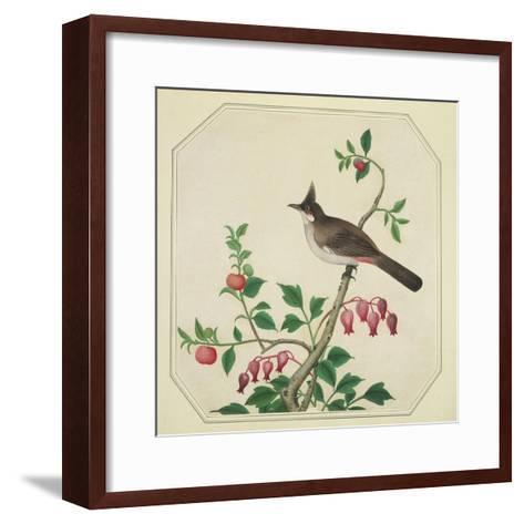 Taiwan Yuhina, c.1800-40--Framed Art Print