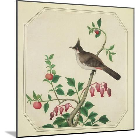 Taiwan Yuhina, c.1800-40--Mounted Giclee Print