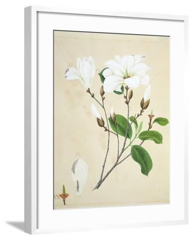 Magnolia, c.1800-40--Framed Art Print