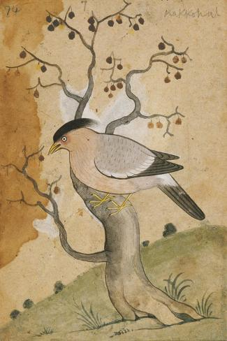 Black Headed Myna on a Tree-Trunk, India, 19th Century--Stretched Canvas Print
