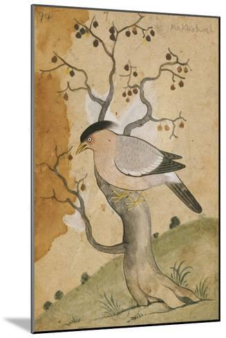 Black Headed Myna on a Tree-Trunk, India, 19th Century--Mounted Giclee Print