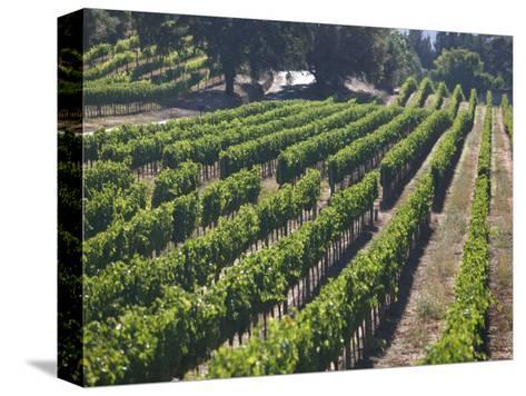 Fall Vineyard View, Yountville, Napa Valley, California-Walter Bibikow-Stretched Canvas Print