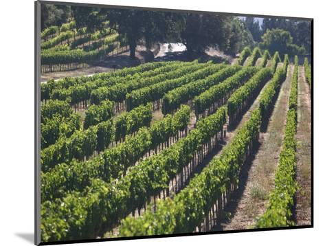 Fall Vineyard View, Yountville, Napa Valley, California-Walter Bibikow-Mounted Photographic Print