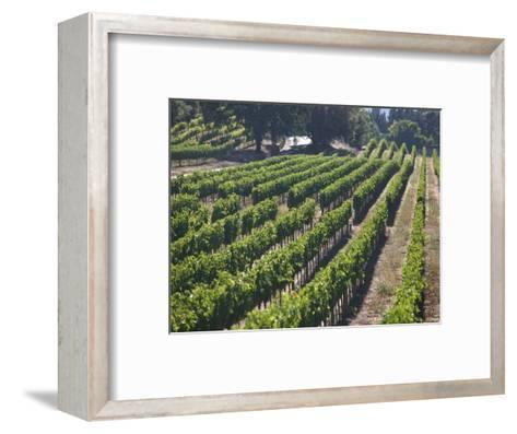 Fall Vineyard View, Yountville, Napa Valley, California-Walter Bibikow-Framed Art Print