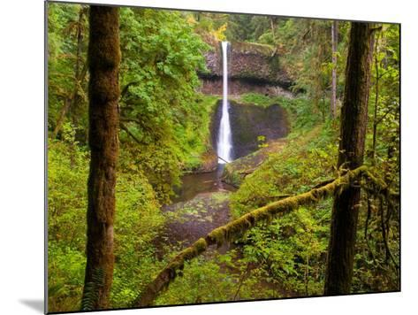 Silver Falls State Park, Salem, Oregon-Darrell Gulin-Mounted Photographic Print