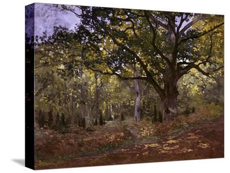 Bodmer Oak, Fontainbleau Forest-Claude Monet-Stretched Canvas Print