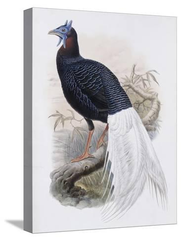 Bulwer's Pheasant-John Gould-Stretched Canvas Print