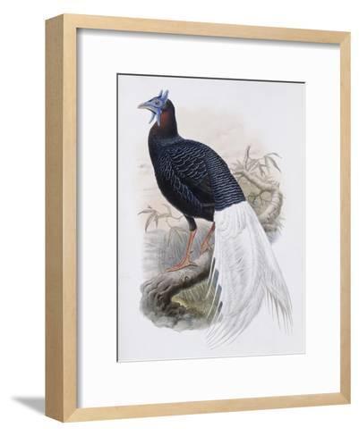 Bulwer's Pheasant-John Gould-Framed Art Print