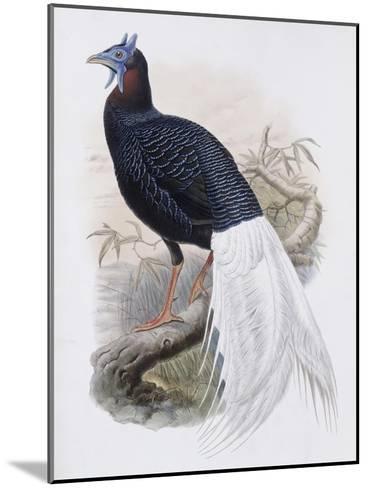 Bulwer's Pheasant-John Gould-Mounted Giclee Print