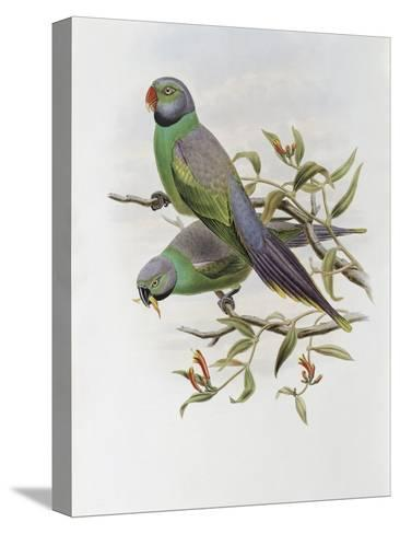 Mrs. Layard's Parakeet-John Gould-Stretched Canvas Print