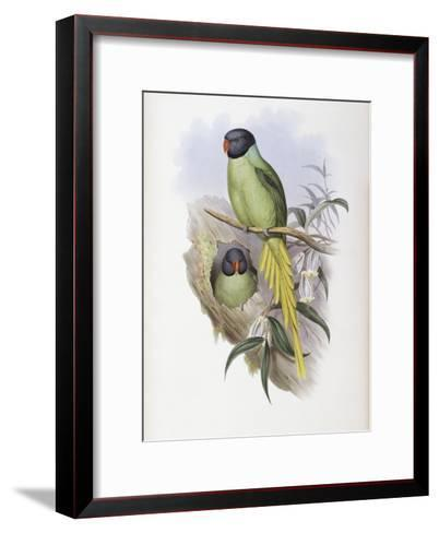 Slaty Headed Parakeet-John Gould-Framed Art Print