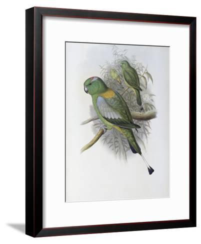 Racket Tailed Parrot-John Gould-Framed Art Print