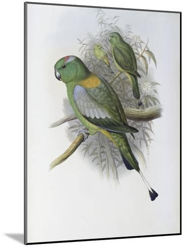 Racket Tailed Parrot-John Gould-Mounted Giclee Print