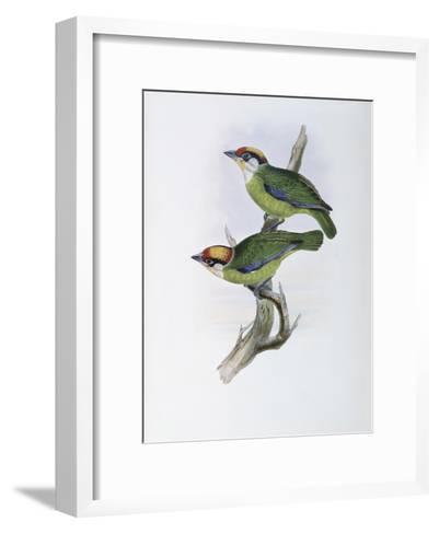 Franklin's Barbet-John Gould-Framed Art Print