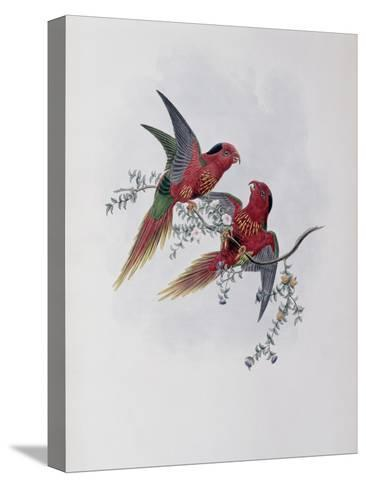 Pectoral Lorikeet-John Gould-Stretched Canvas Print