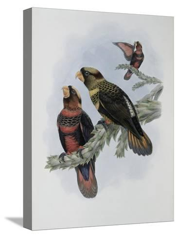 Banded Lory-John Gould-Stretched Canvas Print
