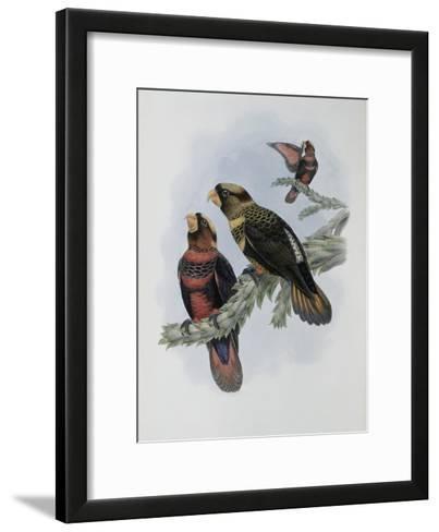 Banded Lory-John Gould-Framed Art Print