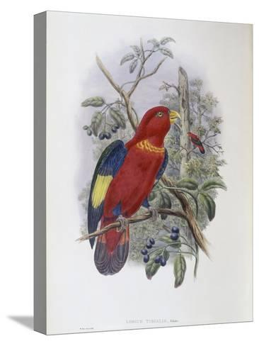 Blue, Thighed Lory-John Gould-Stretched Canvas Print