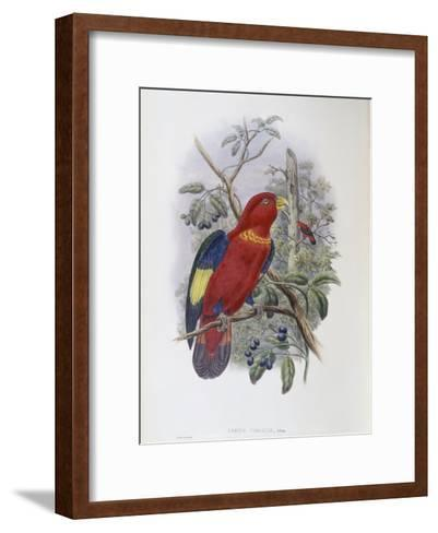 Blue, Thighed Lory-John Gould-Framed Art Print