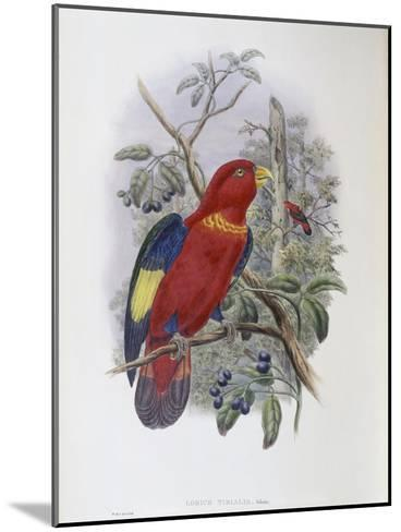 Blue, Thighed Lory-John Gould-Mounted Giclee Print