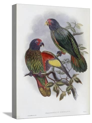 Red Fronted Lory-John Gould-Stretched Canvas Print