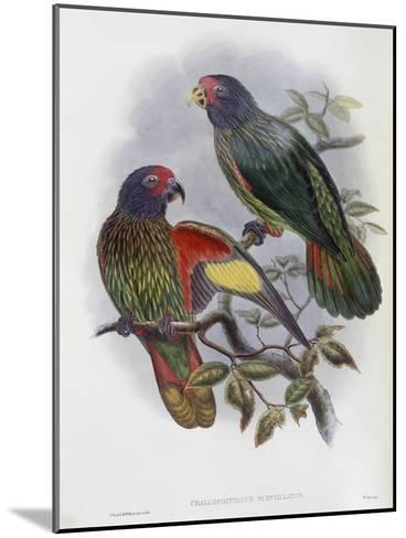 Red Fronted Lory-John Gould-Mounted Giclee Print