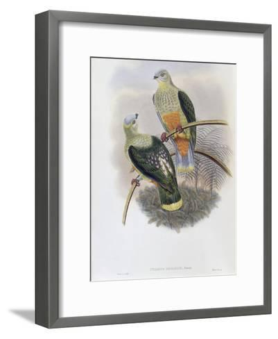 Richard's Fruit Pigeon-John Gould-Framed Art Print