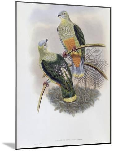 Richard's Fruit Pigeon-John Gould-Mounted Giclee Print