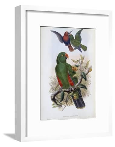 Green Lory-John Gould-Framed Art Print