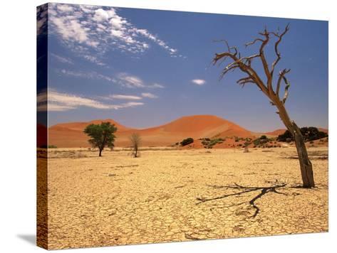 Tree in Namib Desert, Namibia-Walter Bibikow-Stretched Canvas Print