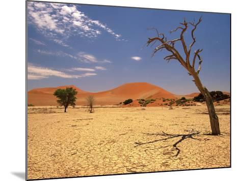 Tree in Namib Desert, Namibia-Walter Bibikow-Mounted Photographic Print