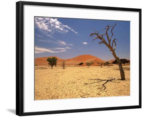 Tree in Namib Desert, Namibia-Walter Bibikow-Framed Art Print