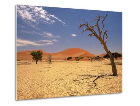 Tree in Namib Desert, Namibia-Walter Bibikow-Metal Print