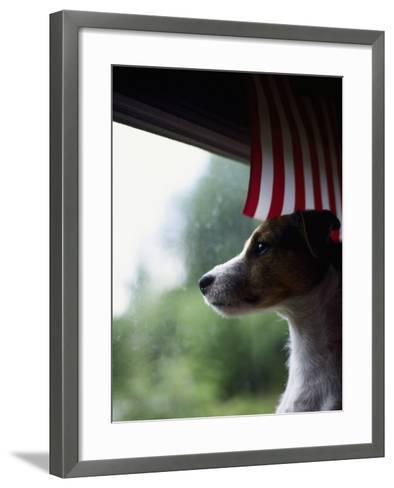 Jack Russell Terrier Near Window with American Flag-Jim Corwin-Framed Art Print