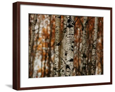 Autumn Colors at Lake of the Woods, Ontario, Canad-Keith Levit-Framed Art Print