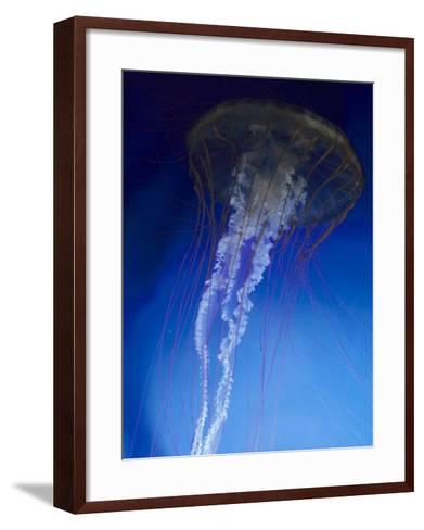 Jellyfish-Harold Wilion-Framed Art Print