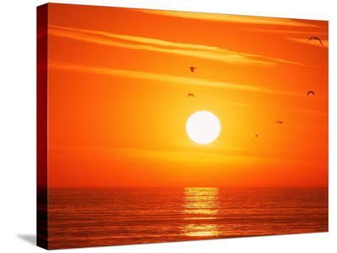 Birds Flying at Sunset, Playa Del Rey, CA-Harvey Schwartz-Stretched Canvas Print
