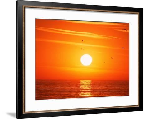 Birds Flying at Sunset, Playa Del Rey, CA-Harvey Schwartz-Framed Art Print